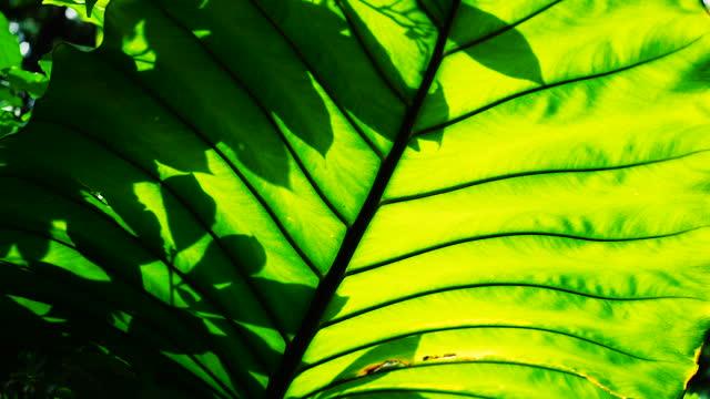 sunlight shining through large palm leaf swaying