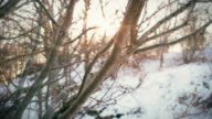 istock Sunlight shining through the branches of a tree in a park meadow on a snowy winter day in slow motion. 1186529019
