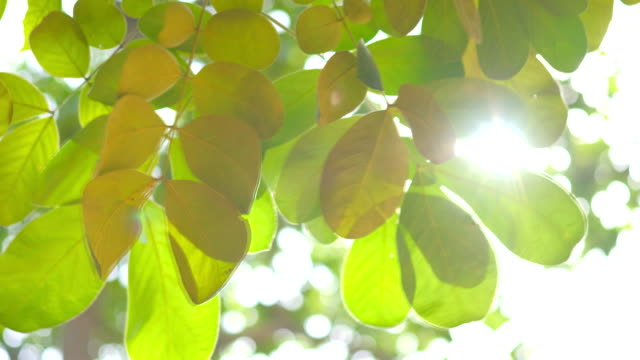 sunlight shining through the leaves of the trees, nature blurred background, nature green bokeh - simbolo concettuale video stock e b–roll