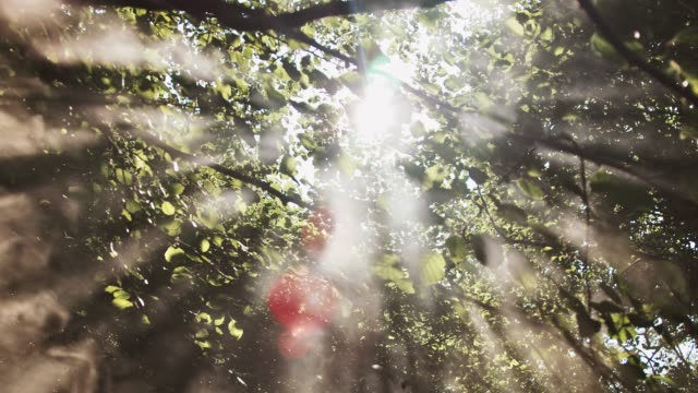 Sunlight streaming through trees in forest Low angle view of sunlight streaming through trees. Handheld shot of forest in foggy weather. Scenic view of nature. trees in mist stock videos & royalty-free footage
