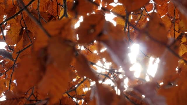 sunlight through autumn leaves on tree - ноябрь стоковые видео и кадры b-roll