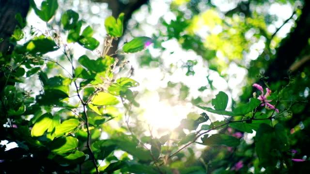 vídeos de stock, filmes e b-roll de luz solar através de folhas verdes no verão. - cena não urbana