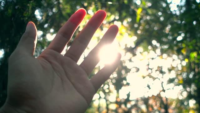 sonnenlicht durch menschliche finger - menschlicher finger stock-videos und b-roll-filmmaterial