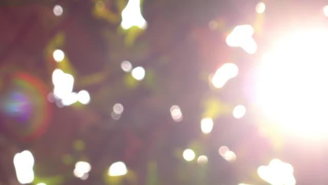 sunlight through leaf on tree, 4k blur shot sunlight through leaf on tree, 4k blur shot daylight savings stock videos & royalty-free footage