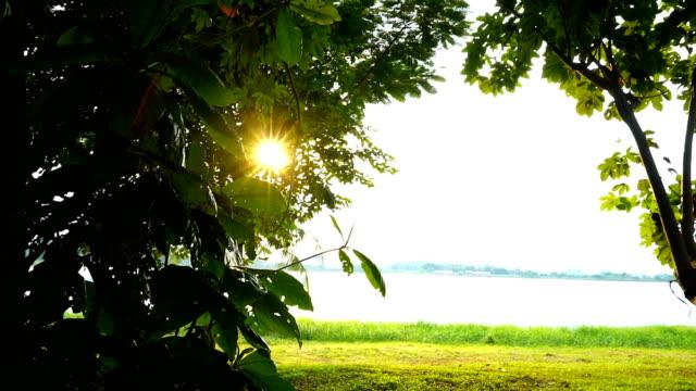 Sunlight through leaf Sunlight through leaf of palm tree daylight savings stock videos & royalty-free footage