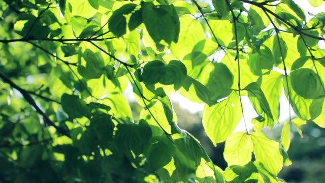 vídeos de stock e filmes b-roll de sunlight through summer leaves with fresh green leaves and trees - oscilar