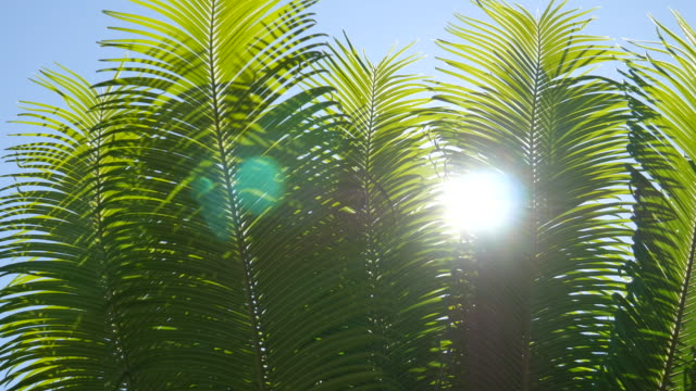 4K : Sunlight through the leaves in the morning video
