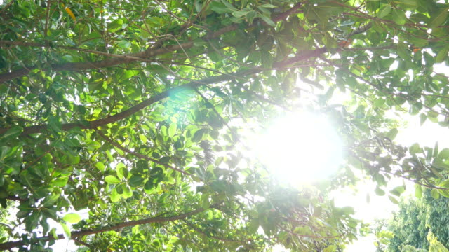 Sunlight through the leaves trees video