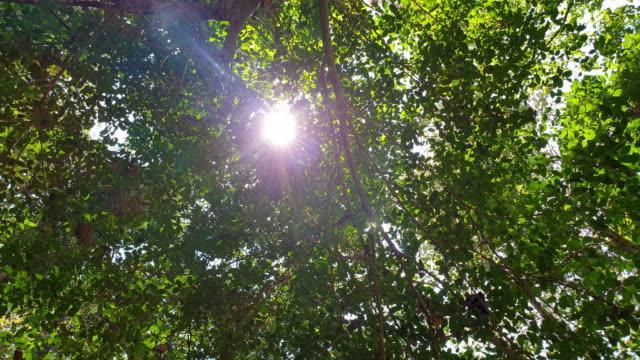 sunlight through the leaves - guardare in su video stock e b–roll