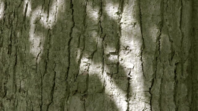Sunlight through Tree Leaves casting Shadows on a Tree Trunk video