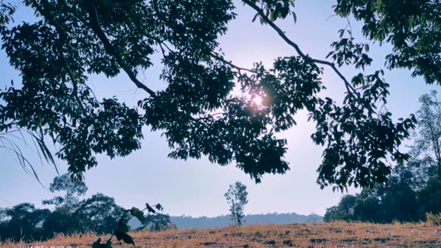 vídeos de stock e filmes b-roll de sunlight through tree. - oscilar
