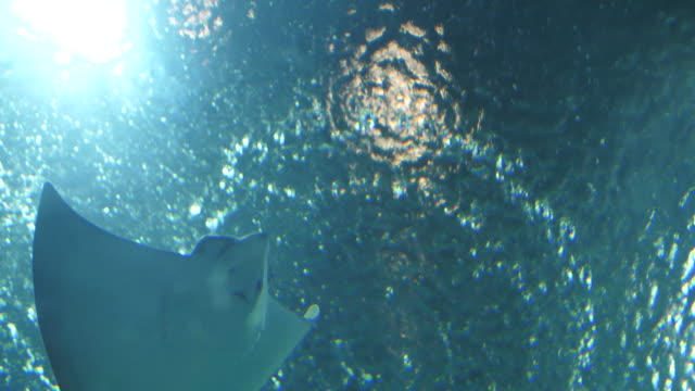 vídeos de stock e filmes b-roll de sunlight through underwater and tropical fish - uge