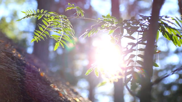 HD Sunlit fern. video