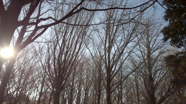 sunlit foliage in yoyogi park in tokyo , japan . - albero spoglio video stock e b–roll