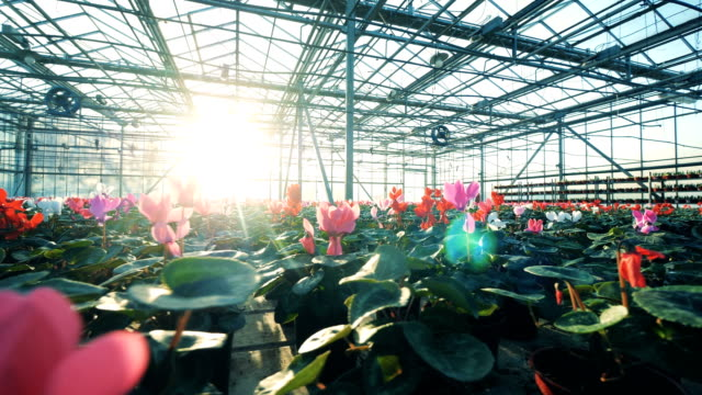 sunlit hothouse filled with blossoming flowers - earth day stock videos & royalty-free footage