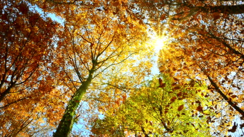 vídeos de stock e filmes b-roll de sunlit treetops and falling autumn leaves - sol
