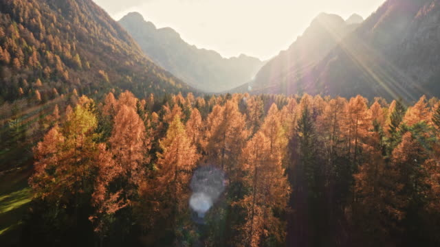 AERIAL Sunlit treetops in fall video