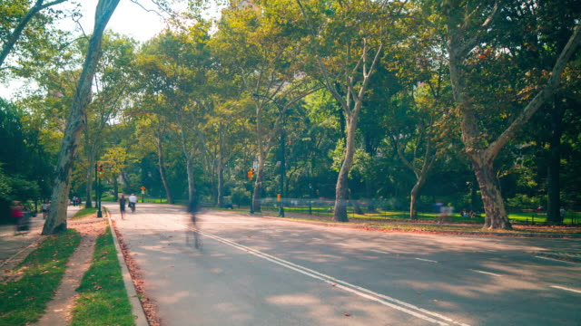 sunny day central park runners road 4k time lapse from new york video