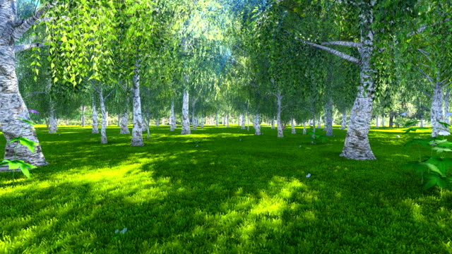 Sunny day in the birch grove video