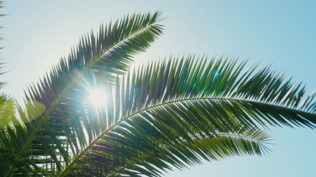 a sunny day in the warm south. the sun's rays make their way through the leaves of the palm tree. lens flare effect - albero tropicale video stock e b–roll