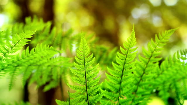 Sunny Ferns In The Forest Loop video