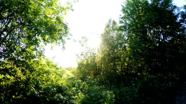 Sunny forest. 360 degree panorama rotation. video