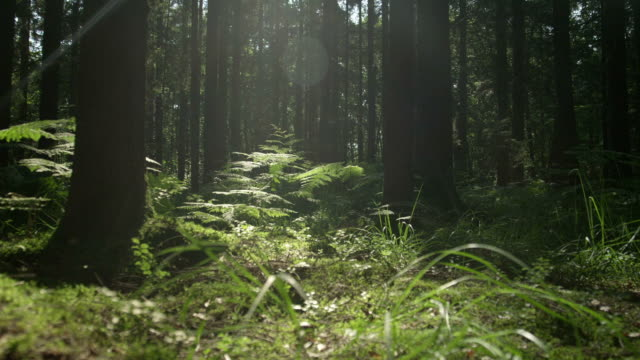 SLOW MOTION: Sunny forest ground in early spring video