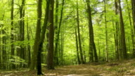 istock Sunny Forest in Springtime 1222808674