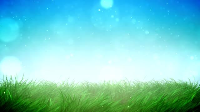 Sunny grass loop video