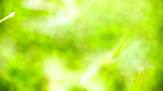 Sunny green background Sunny green defocused background. Seamless loop. Abstract nature.  saturated color stock videos & royalty-free footage