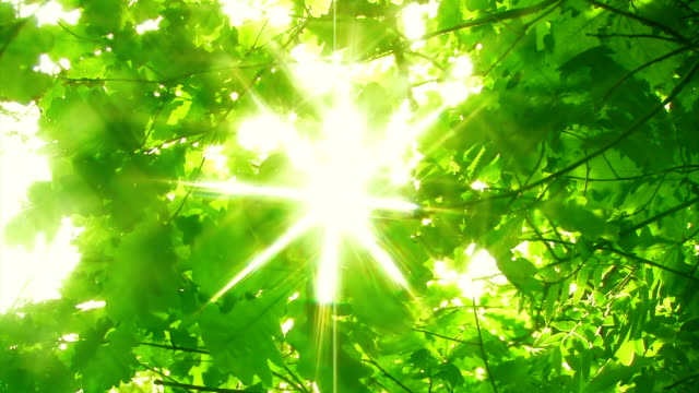 Sunny green forest video