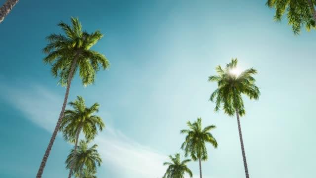 sunny palms alley moving through loop animation lens flare effect. - palm tree filmów i materiałów b-roll