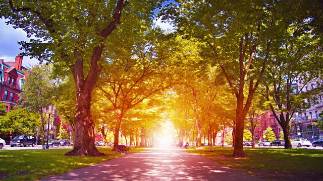 Sunny Park. Nature. City. Way to Away