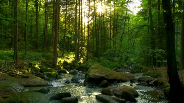 güneşli bahar orman cinemagraph - akan su stok videoları ve detay görüntü çekimi