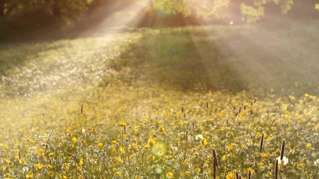 sunny sunbeams - sonnig stock-videos und b-roll-filmmaterial