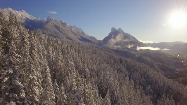 Sunny Winter Aerial of Snow Covered Mountain Forest Trees and Tall Peaks video
