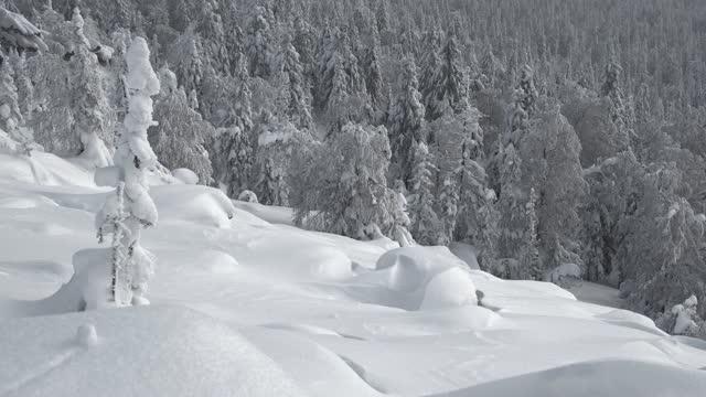 sonniger wintertag. schnee fällt sanft auf den hang mit schneeverwehungen und gefrorenen bäumen. landschaft mit tannenbäumen und weißem wald. - kieferngewächse stock-videos und b-roll-filmmaterial