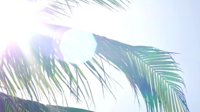 ヤシの葉を通って来るサンレイ - ヤシの木点の映像素材/bロール
