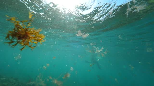 UNDERWATER: Sunrays penetrating glassy sea surface highlighting aquatic world. video