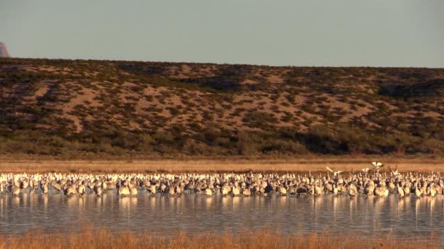 Sunrise At Bosque Del Apache NWR video