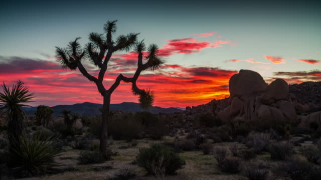 Sunrise at Joshua Tree National Park - Camera Pan video