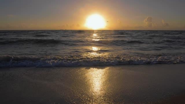 soluppgång vid havet. flygande fågel. slow motion - pink sunrise bildbanksvideor och videomaterial från bakom kulisserna