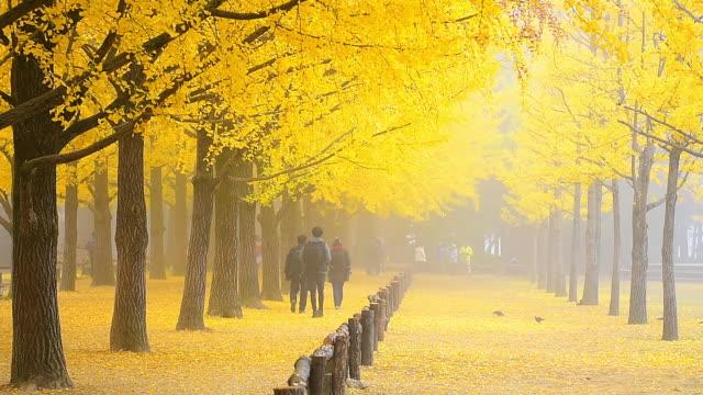 sunrise sonbahar namı island, seoul korea - güney kore stok videoları ve detay görüntü çekimi