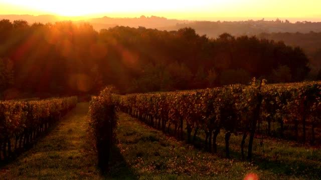 Sunrise Bordeaux Vineyard Time Lapse