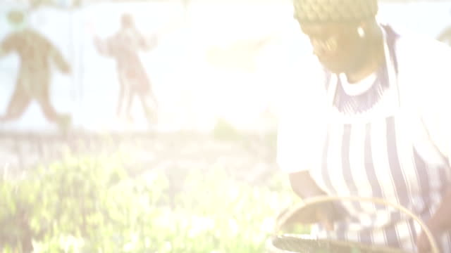 Sunrise flare as African business woman harvests herbs video