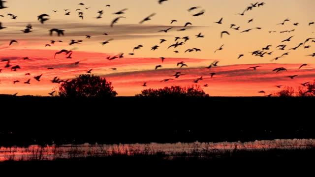 Sunrise Flyout video