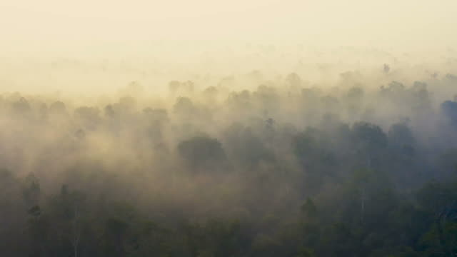 sunrise in borneo kalimantan with heavy smoke covering the rainforest - clima video stock e b–roll