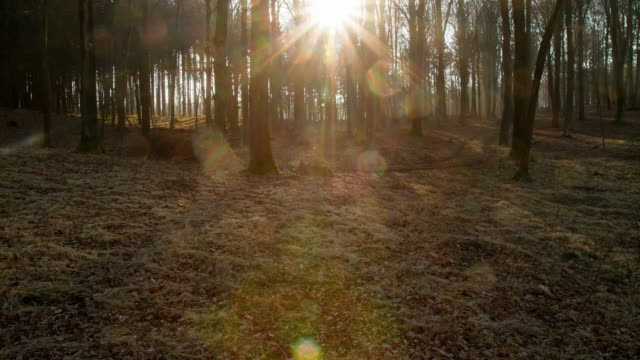 T/L Sunrise in the forest video