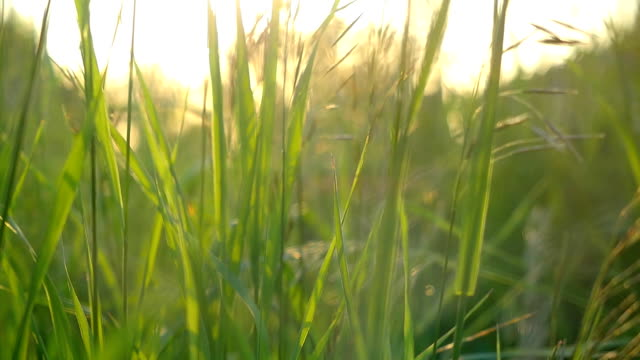 Sunrise in the Grass, Fresh Morning Sunshine in the Nature in slow motion video