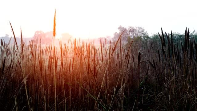 soluppgång i naturen - haryana bildbanksvideor och videomaterial från bakom kulisserna